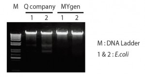 Gene Xpress Mygen Genomic Preparation Kit Column